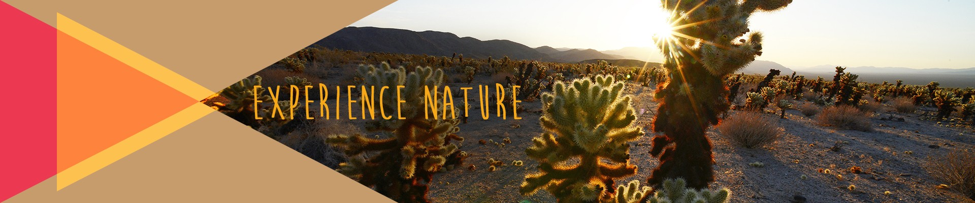 Experience nature - Joshua Tree National Park