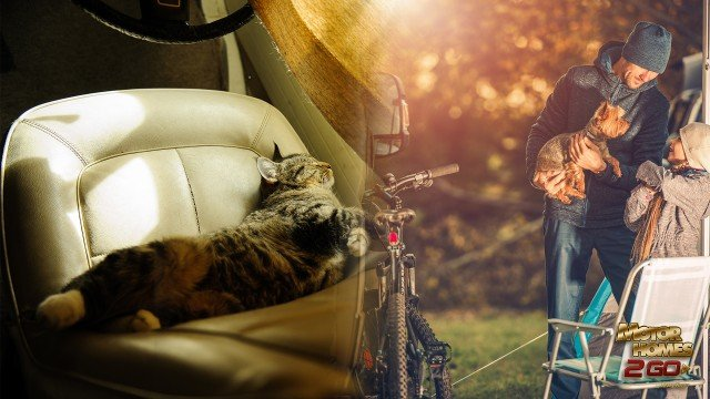 RVing with your pets