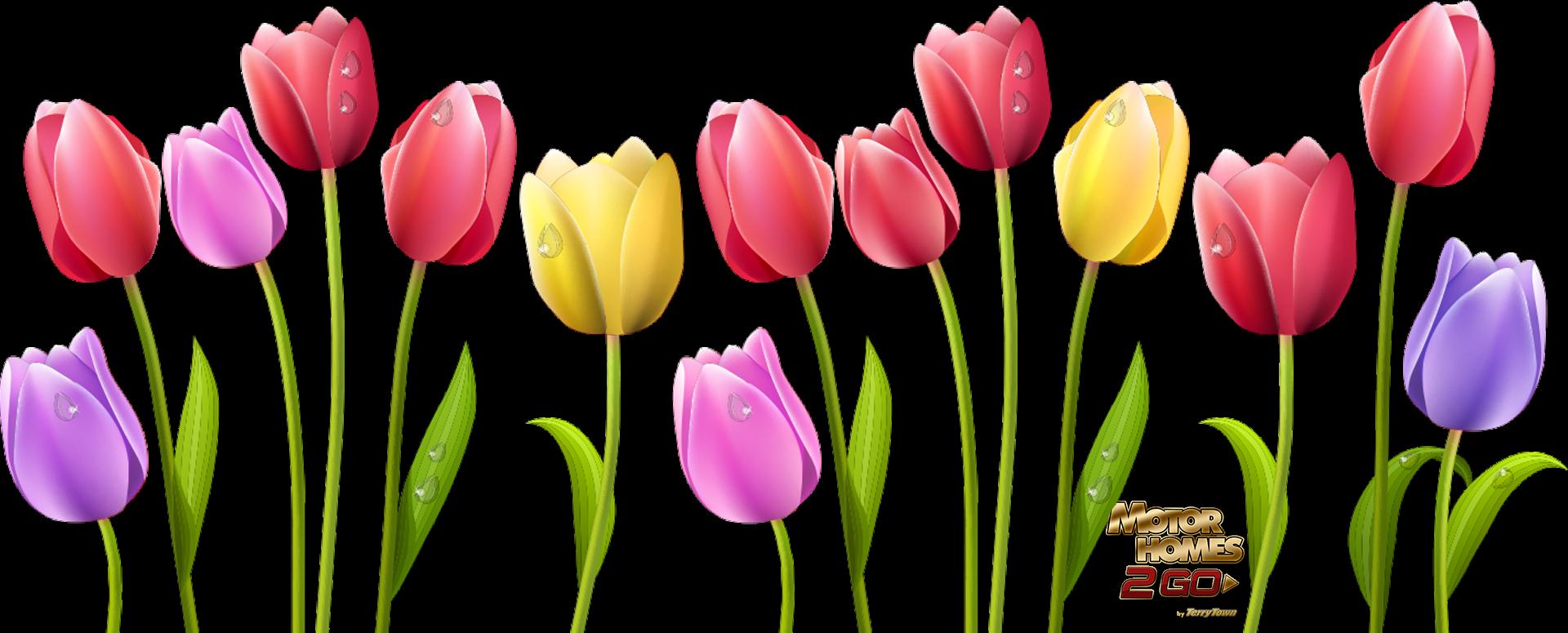 Spring Is Here: Skagit Valley Tulip Fields, WA. Mhs2Go RV Blog