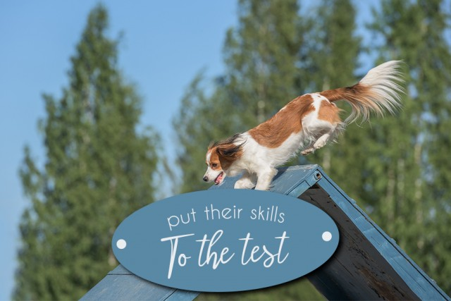 Place your dog in an Agility Competition