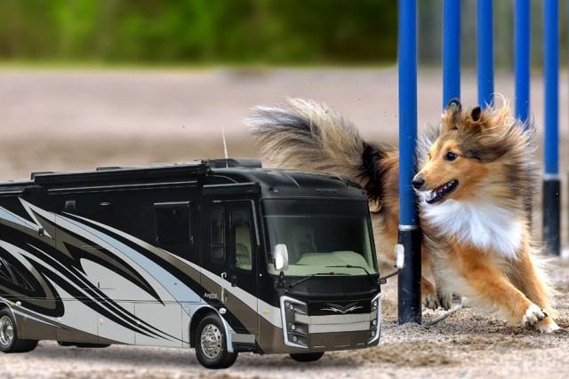 Camping at dog shows