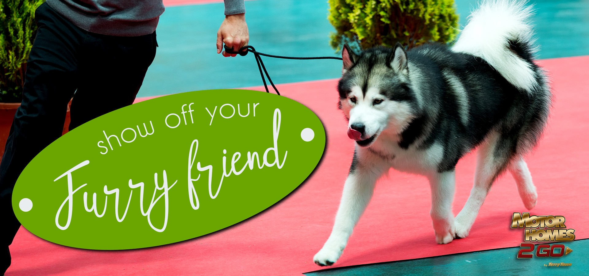Show off your furry friend at a dog show!