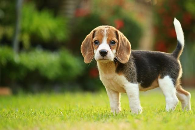 Listen puppy