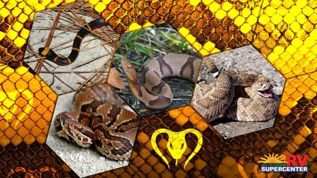 Snakes To Stay Away From Feature