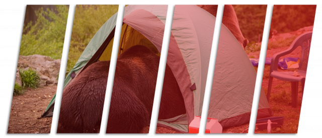 What To Do When Camping In Bear Territory