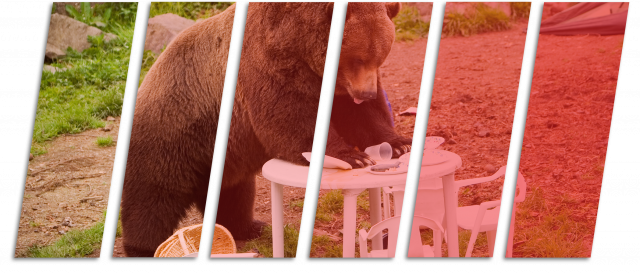 bear on table eating food camping