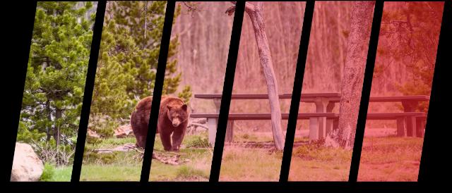 bear walking through the park