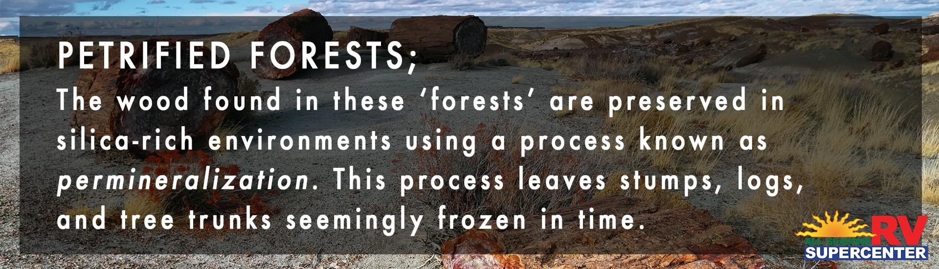 define pretrified forests
