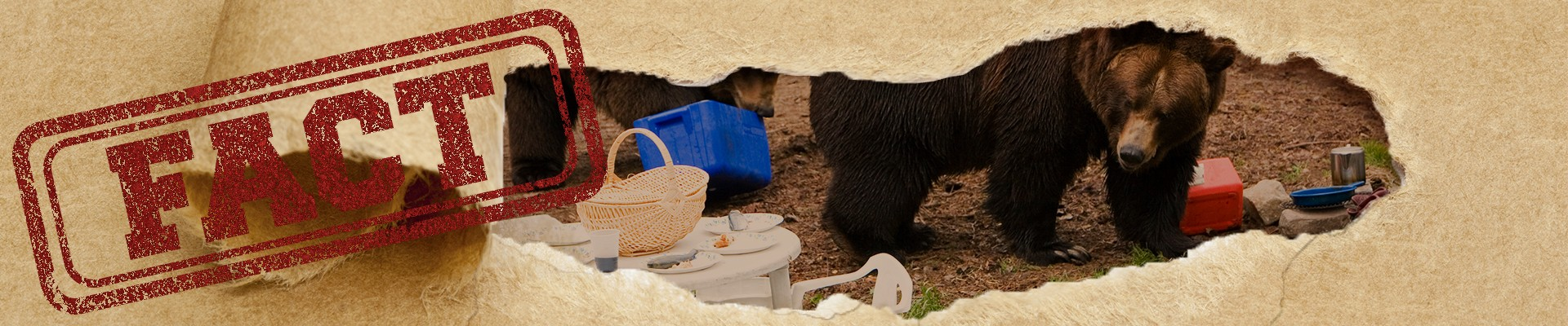Hide your food while camping to avoid attracting bears to your site.