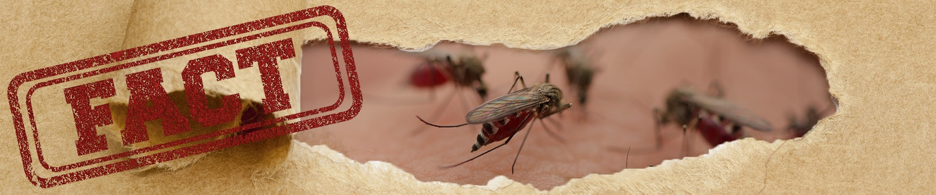 How to repel mosquitos while camping