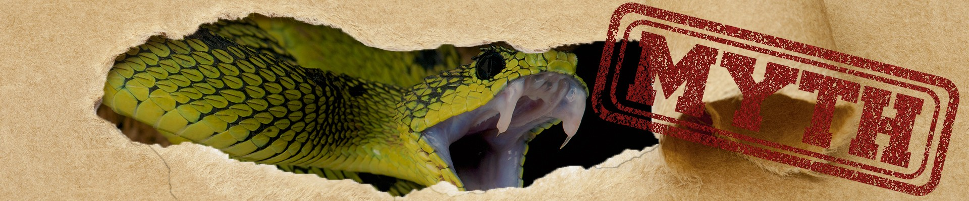 What should you do when you get bit by a snake?