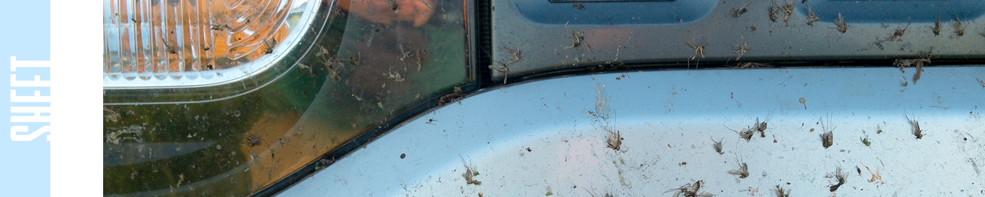 bugs on car with sheet