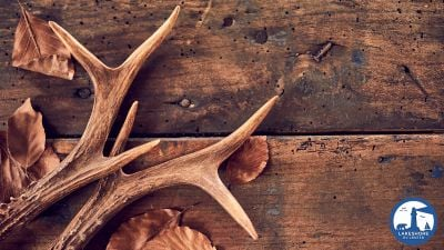 deer-antlers-and-leaves