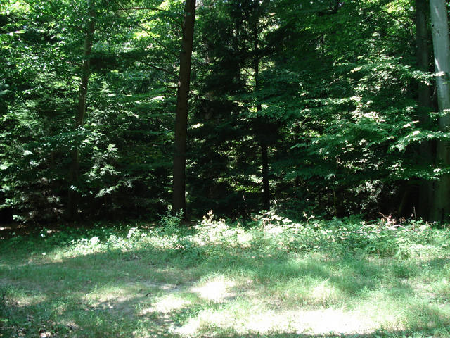 Lot 7 Bix Trail Montague, MI 49437