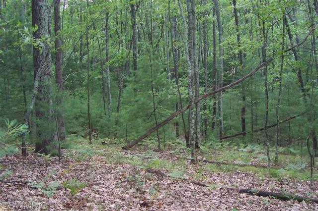 78-81 Trail Of The Lakes  Baldwin MI 49304