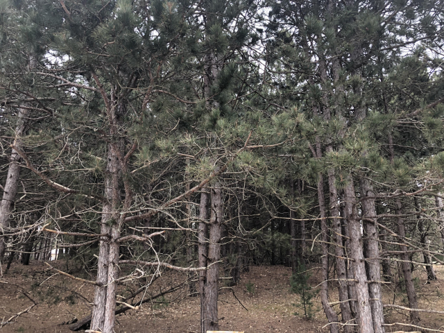 Lot 73 Red Apple Rd Manistee, MI 49660