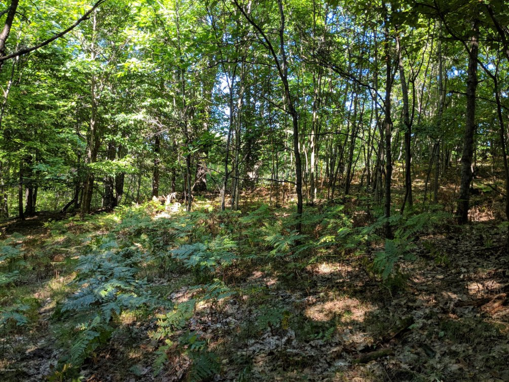 120 Acres North Star Trail Kaleva, MI 49645