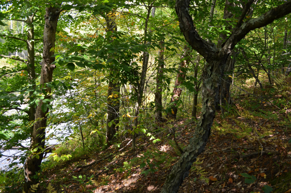 13 Mile Rd Bear Lake, MI 49614