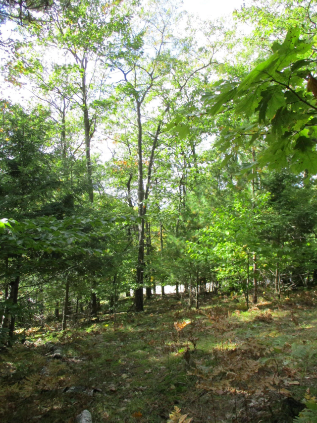 173 Acres M22 Northwood Hwy  Onekama MI 49675