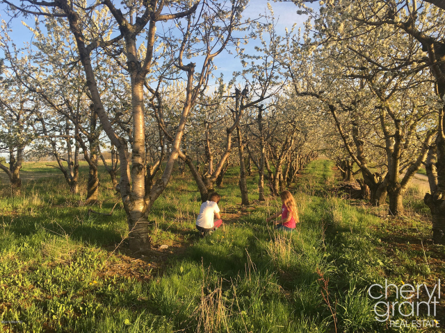 3810 Cherry Blossom 43 Ne Dr Ada MI 49301
