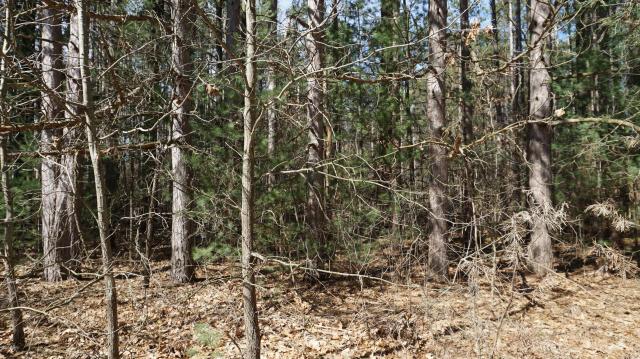 11 Pine Ridge Cir Lawton MI 49065