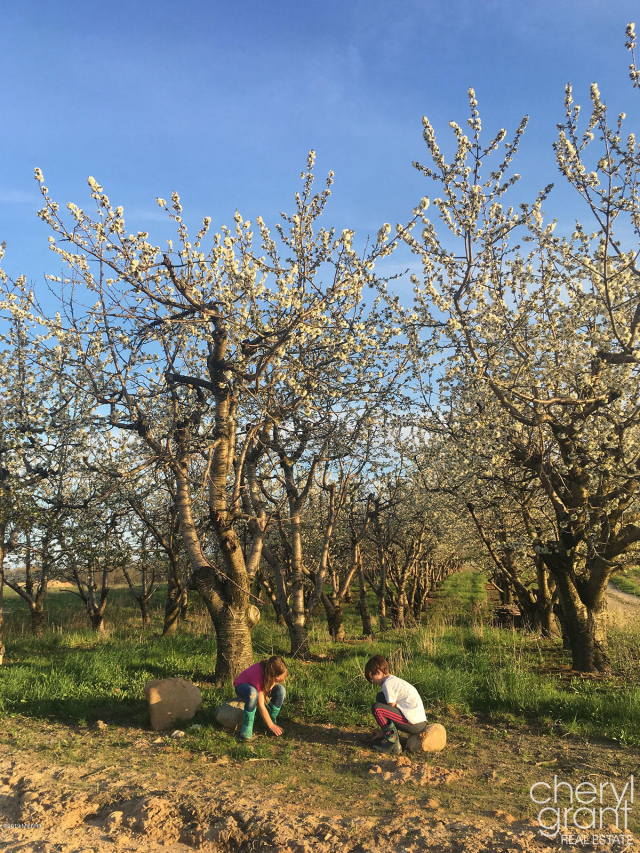 3840 Cherry Blossom 45 Ne Dr Ada, MI 49301