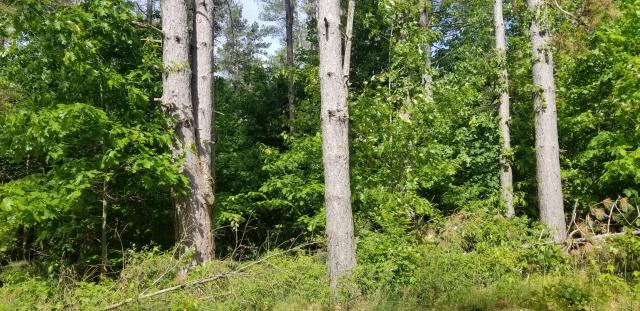 Lot N Meadow View Lane  Hart MI 49420