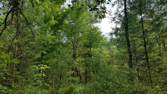 6944 S Tia Trail Newaygo MI 49337