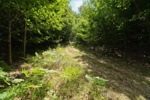 Parcel H Arcadia Ridge Dr Arcadia, MI 49613