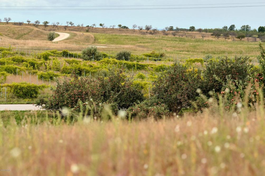 Vineyard View Lot #18 Rd Manistee MI 49660