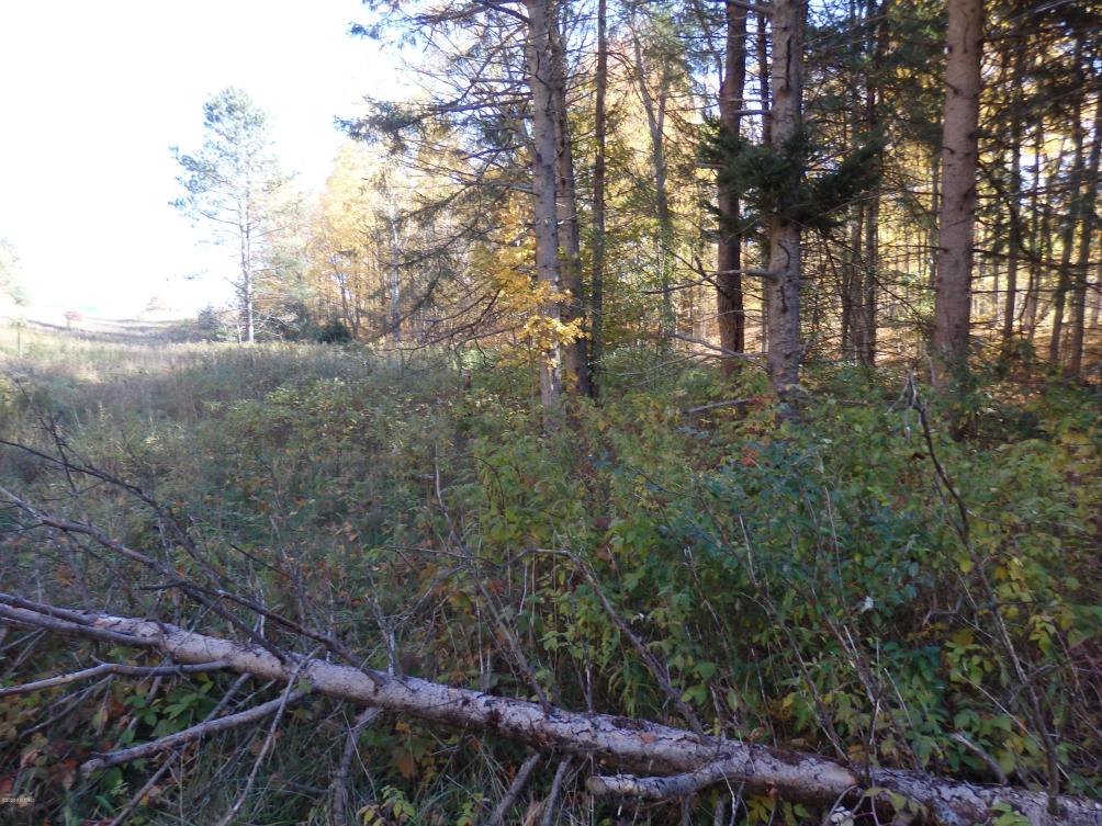 Chief Rd  Bear Lake MI 49614