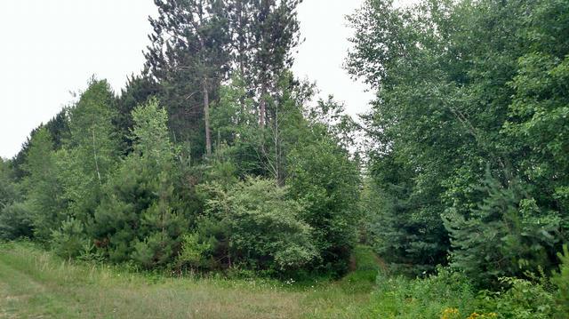 N White Birch Drive 43  Ludington, MI 49431