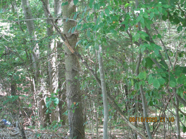 Lot590/591 Hickory Lakeview, MI 48850