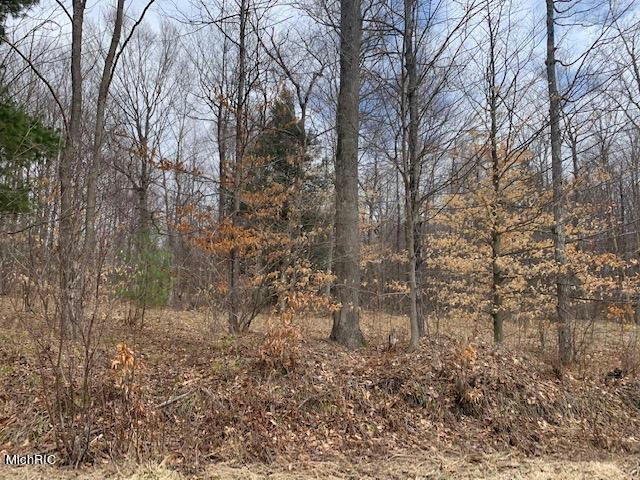 285 Acres 220th Ave Reed City, MI 49677