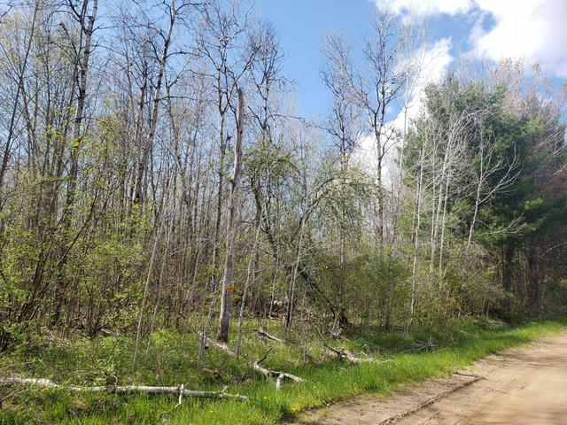 70 Acres 144th Ave Shelby, MI 49455