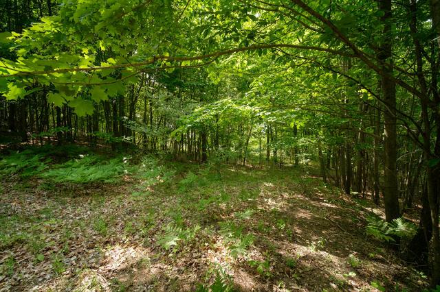 Parcel D Arcadia Ridge Dr Arcadia, MI 49613