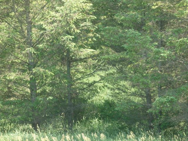 Lumley Rd Bear Lake, MI 49614