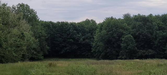 35+/- Acres S 28th Ave Shelby, MI 49455