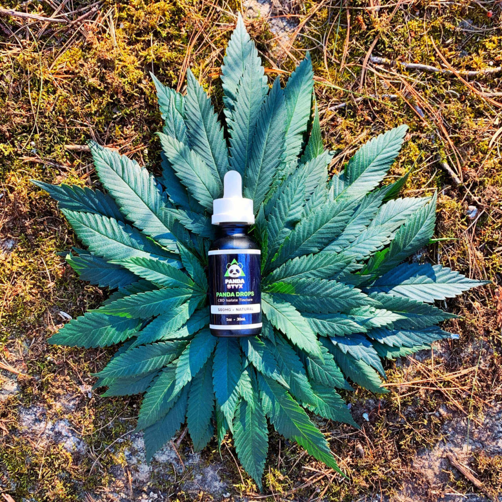panda-isolate-leaves-19092-1586638297