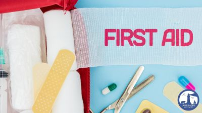 Camping Safety: First Aid Kit Essentials
