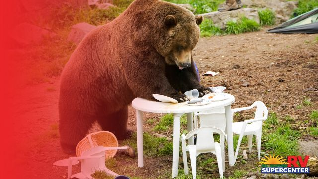 what-to-do-when-camping-in-bear-territory-rv